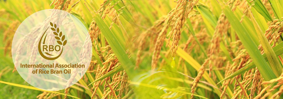 what is rice bran oil
